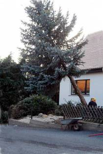 Fällen von Bäumen mit der KaBaut Garten & Landschaftspflege